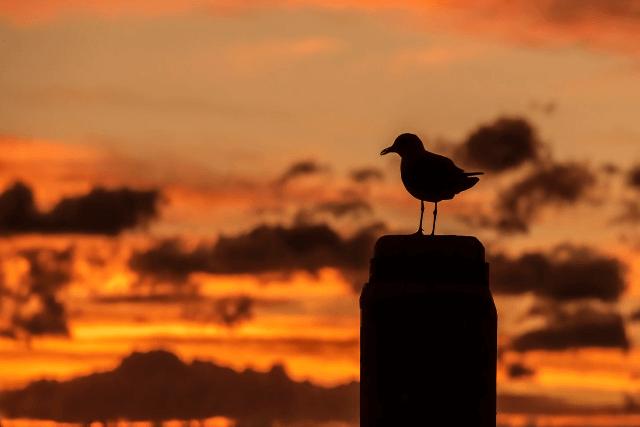 暗い夕焼けの中の鳥