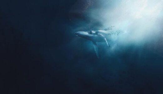 マーケットに泳ぐ巨大なクジラを知る